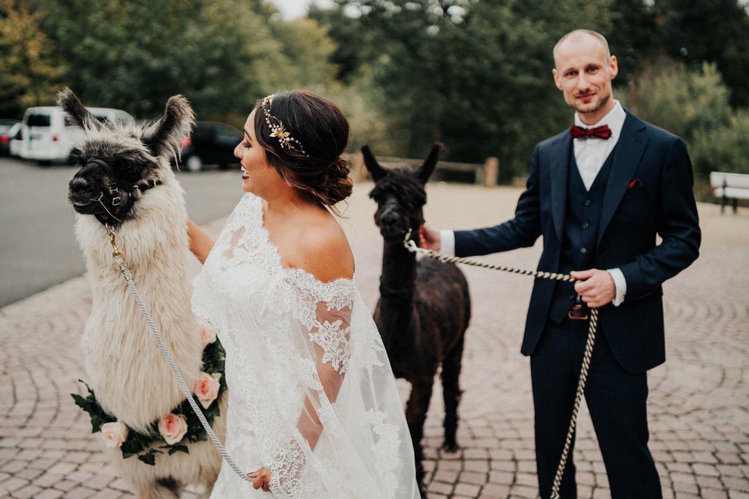 Witzige Idee, ein Alpaka für eine Hochzeit in NRW zu mieten. Brautpaar mit Lamas bei der Hochzeitsreportage
